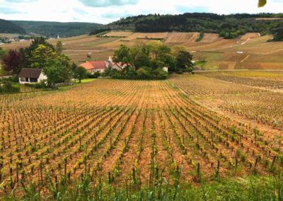 Wineyards around Monthelie