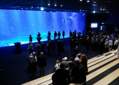 Nausicaa le grand Aquarium